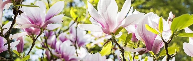 Garten Frühling Lebensart Gießen